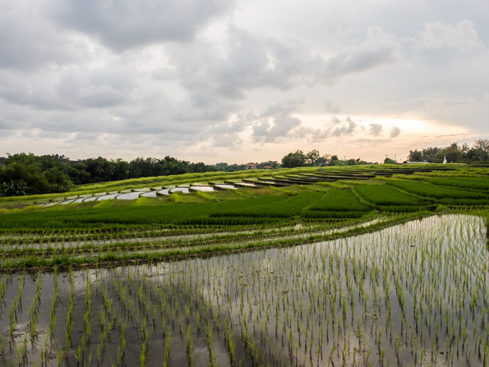 rice-fields-in-canggu-bali-what-you-will-see
